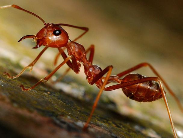 Você Sabia Que As Formigas São Tão Sujas Quanto Baratas !